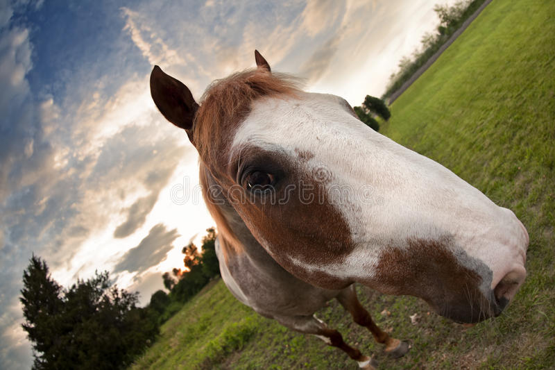 Download Sunset Horse stock image. Image of color, horse, wildlife - 25822179