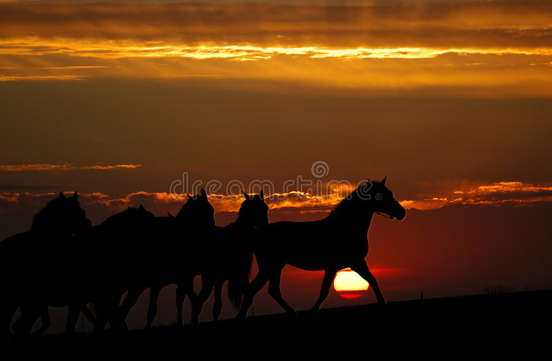 Sunset And Horses (silhouette) Royalty Free Stock Photo