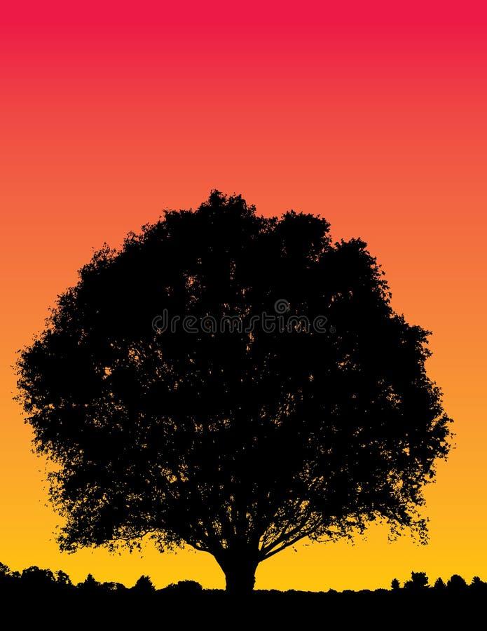 sunset ilustracyjny drzewo. ilustracji