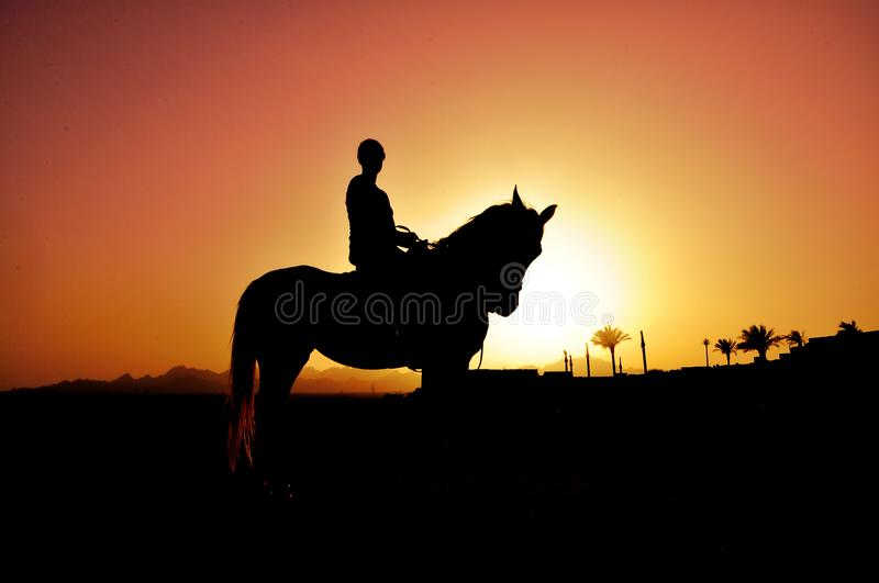 Sunset and imagination with a horse royalty free stock photography
