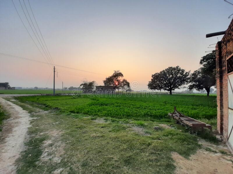 Sunset in village showing natural beauty. Sunset in Indian village showing natural beauty.picture showing green crops ,trees and sunset stock image