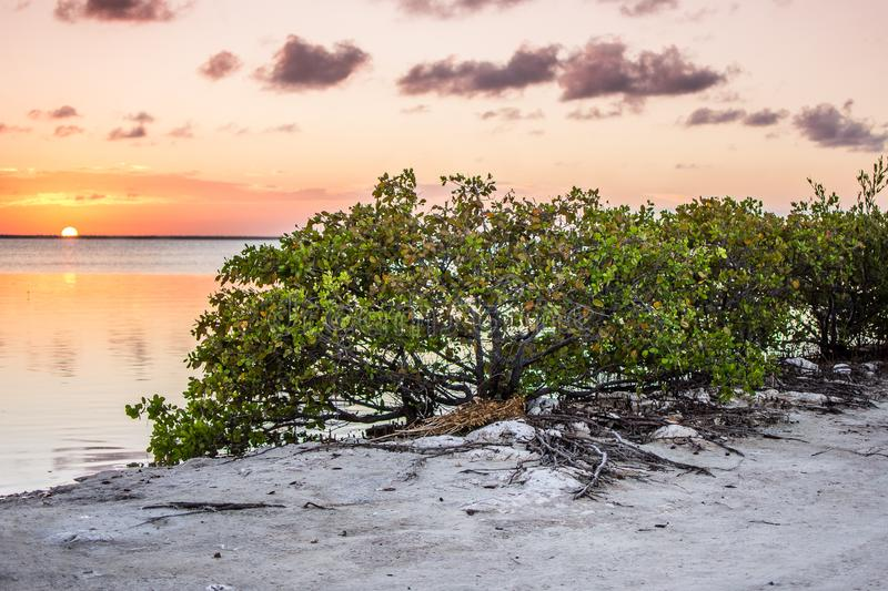 Sunset Isla Blanca royalty free stock images