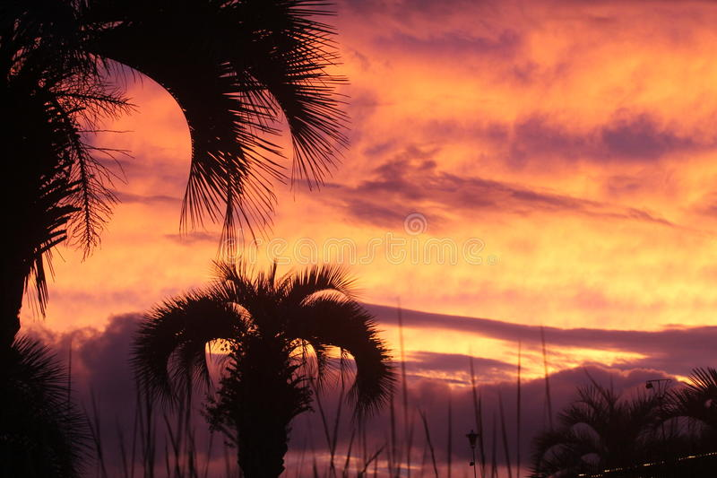 Sunset Johns Island SC. Johns Island Charleston South Carolina Nature Wildlife Sunset Amazing 2016 palm trees rainbow royalty free stock photos