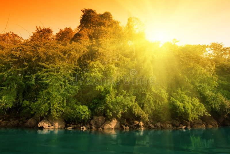Sunset in jungle royalty free stock photo