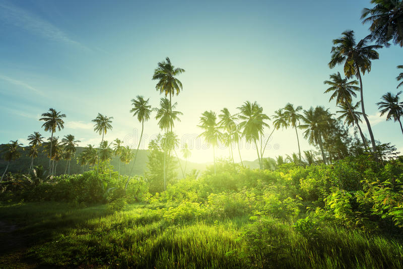 Sunset in jungle royalty free stock images