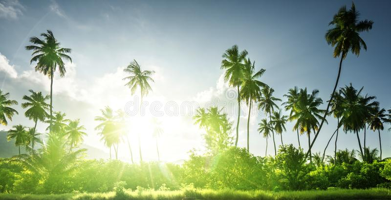Sunset in jungle, seychelles royalty free stock image