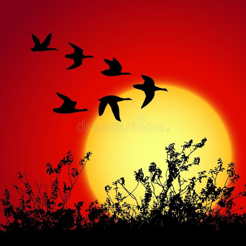 sunset krajobrazu ilustracja wektor