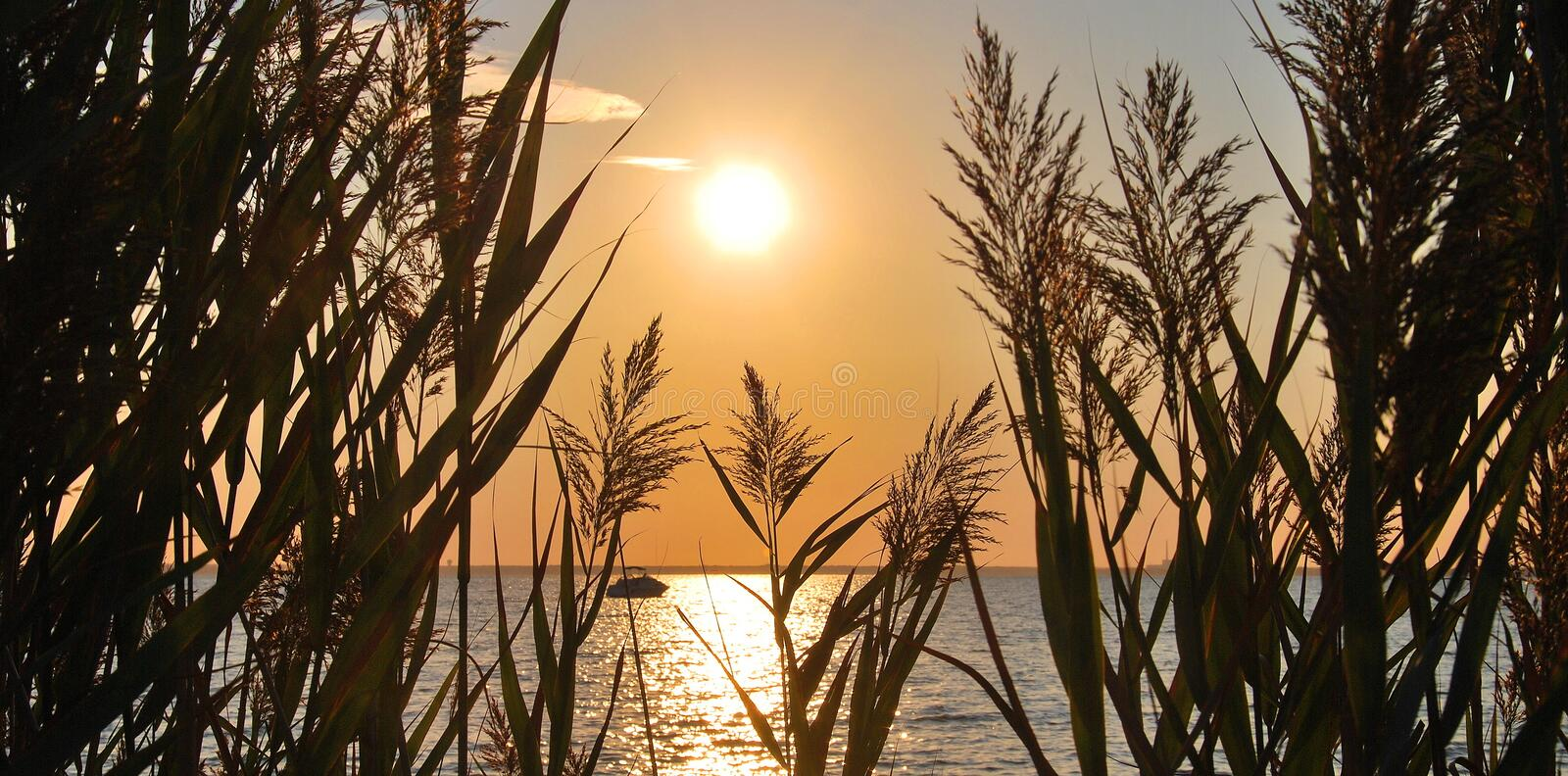 Download Sunset on the lake stock image. Image of cane, summer - 28649509