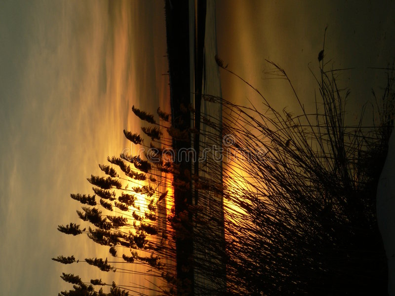 Sunset on a lake. Behind the reeds royalty free stock images