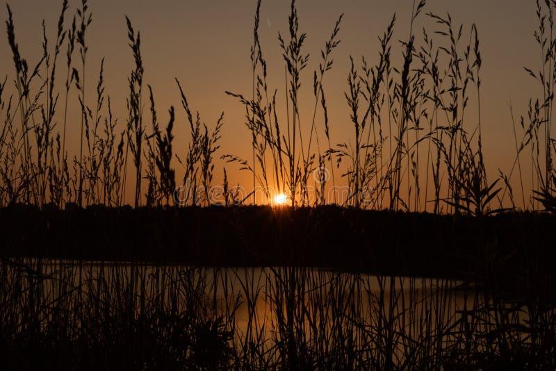Sunset on the lake. Evening stock image