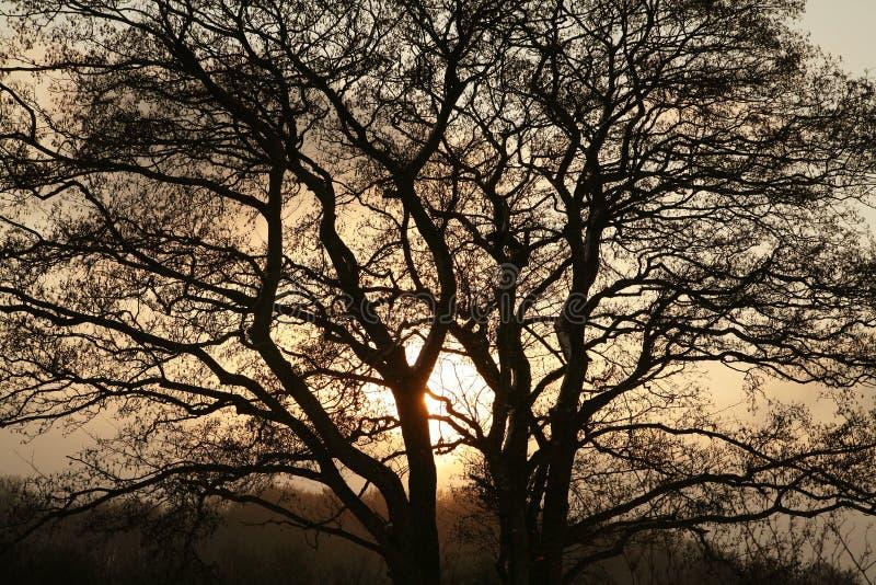 Download Sunset landscape stock image. Image of leaf, countryside - 1277899