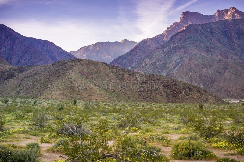 Sunset landscape in Anza Borrego Desert State Park during spring, California stock photos