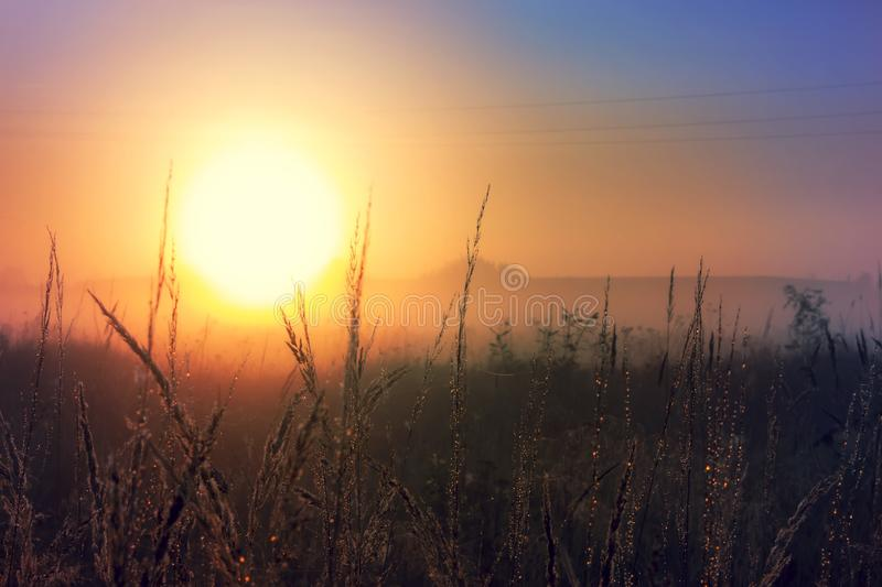 Sunset landscape autumn scene with tall grass stock image