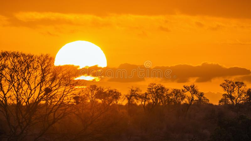 Sunset landscape in Kruger National park, South Africa stock image