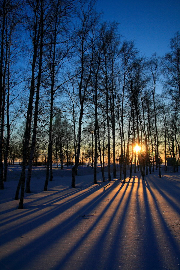 Sunset through leafless trees in winter stock image
