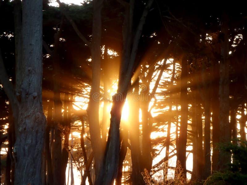Sunset Light dacht aan de bomen royalty-vrije stock fotografie