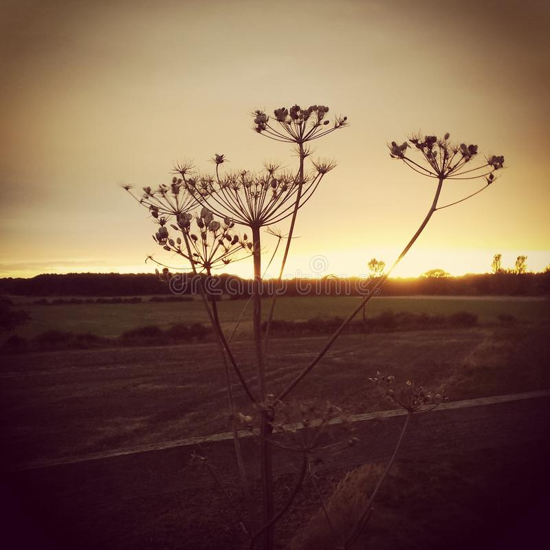 Sunset in Lincolnshire stock photography