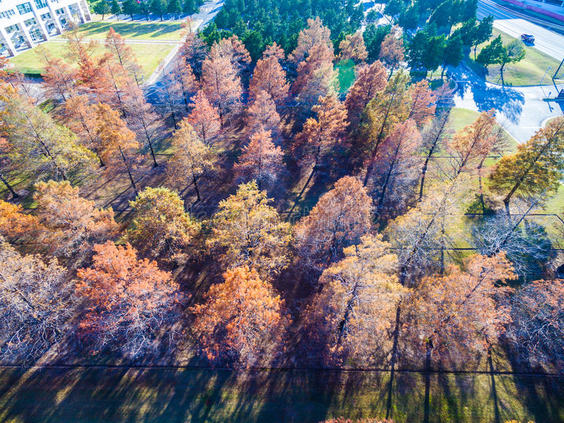 Sunset long shadows Aerial Over Winter Trees brown and dropping their leaves rows and rows. Of Trees some yellow , some almost dead with no leaves , and some stock photo