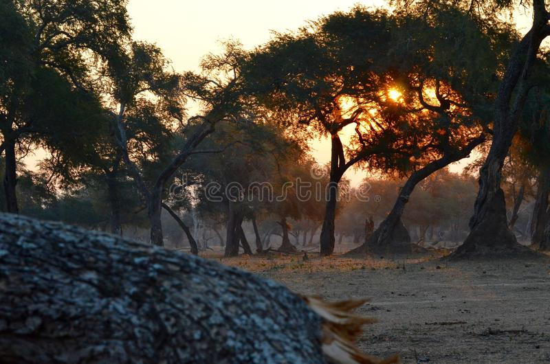 Sunset in mana-pools national park stock photo
