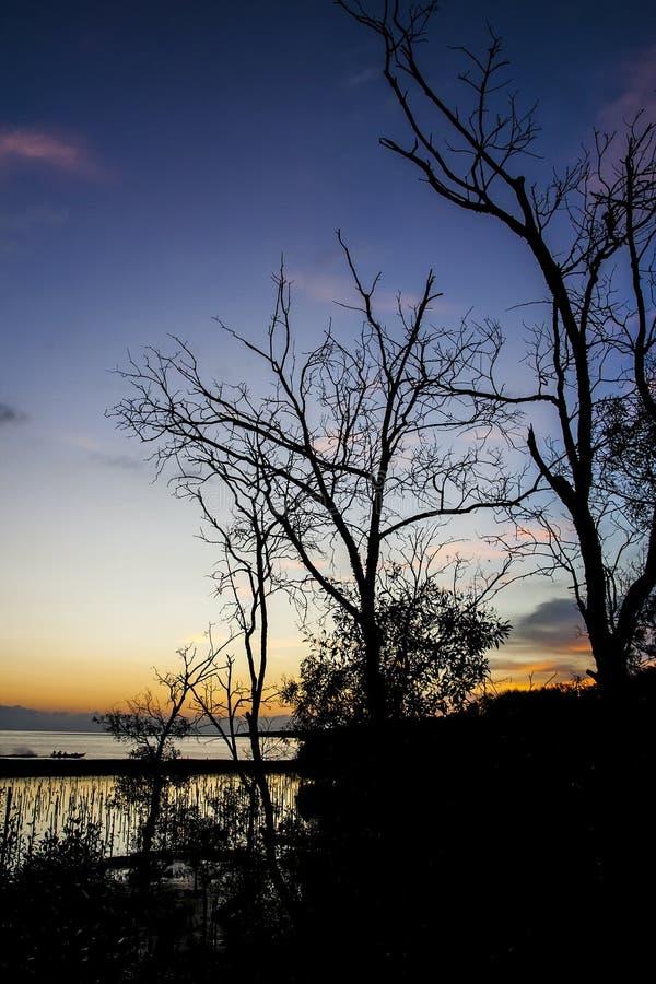 Sunset at mangrove forest. With a fisherman boat returning home. Sungai Besar, Sabak Bernam, Selangor, Malaysia stock image