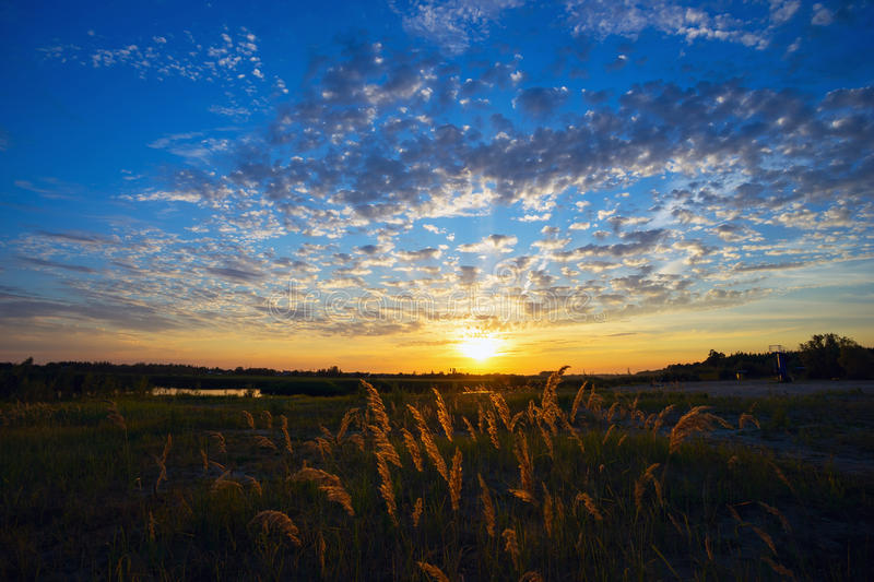 Sunset in a meadow with reed. Panicles of reeds at sunset. Summer landscape royalty free stock photos