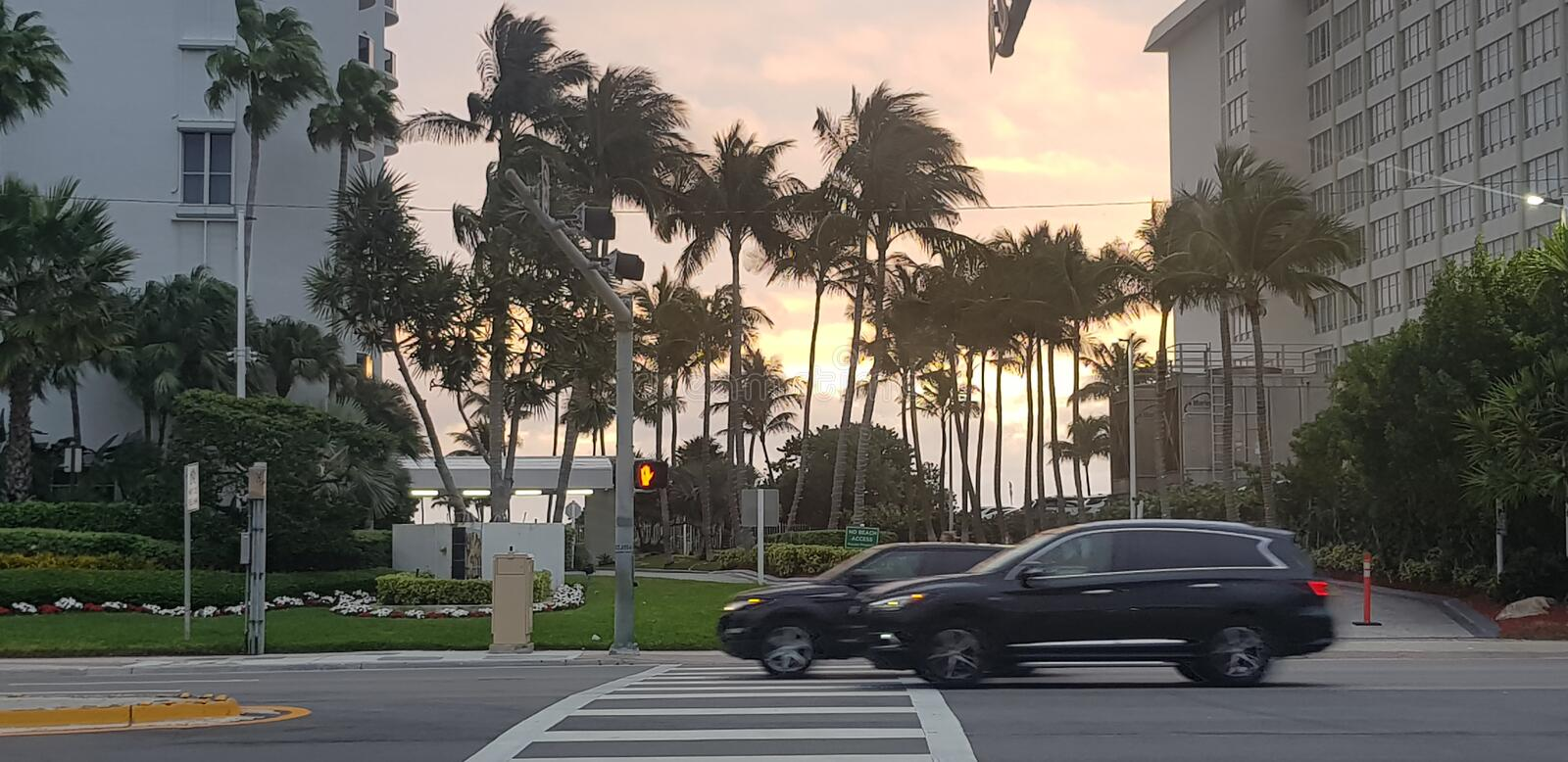 Sunset in Miami With Road, Cars and Stoplight. Card, crossibg, crossing, yellow, sky, apparment, appartement, palm, , tree, trees, florida, maimai, maimi royalty free stock photo