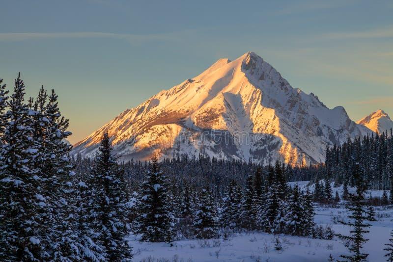 Sunset on mount Nestor in Spray Valley Provinpark i Kananaskis, Alberta royaltyfria bilder