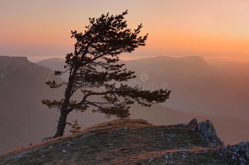 Sunset in mountain. Pine on the edge of a cliff in the mountains of Crimea in the evening stock photos