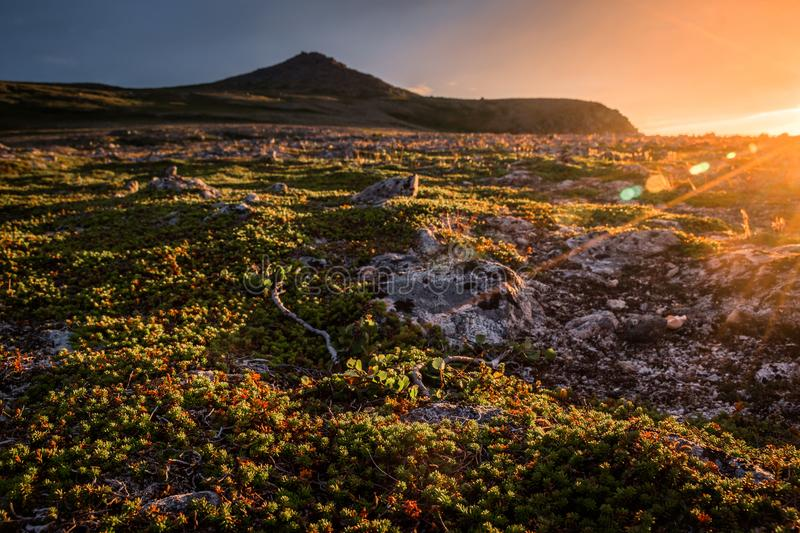 Sunset on the mountain plateau, with sun flare and golden tones in tundra vegetation. Grass and rocks, taken in summer near Nordkapp, Norway stock image