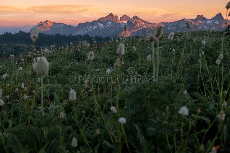 Sunset from Mt Rainier National Park across an field of alpine meadow flowers to mountain range stock photo