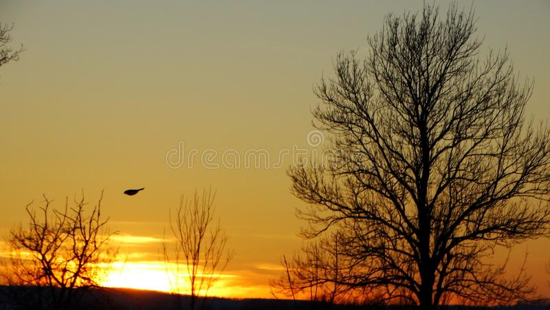 Sunset in nature royalty free stock image