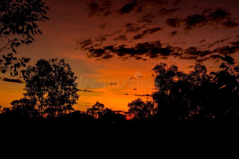 Download Sunset stock image. Image of yellow, australia, tree - 78443969