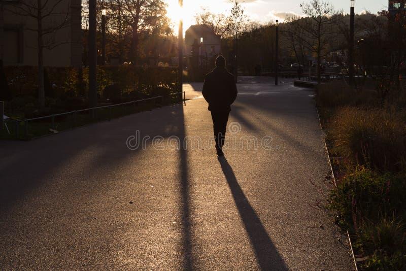 sunset in november autumn boulevard stock photo