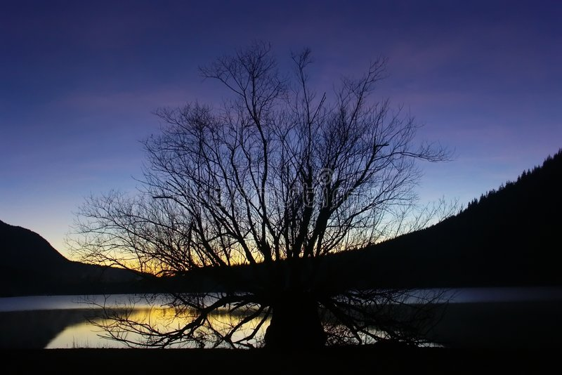 Download Sunset And Nursing Tree Royalty Free Stock Images - Image: 57399