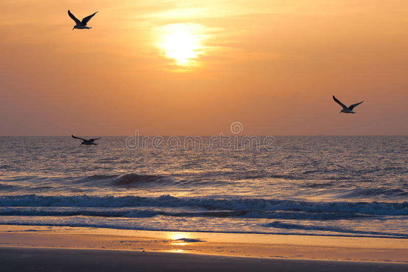 Sunset and ocean stock images