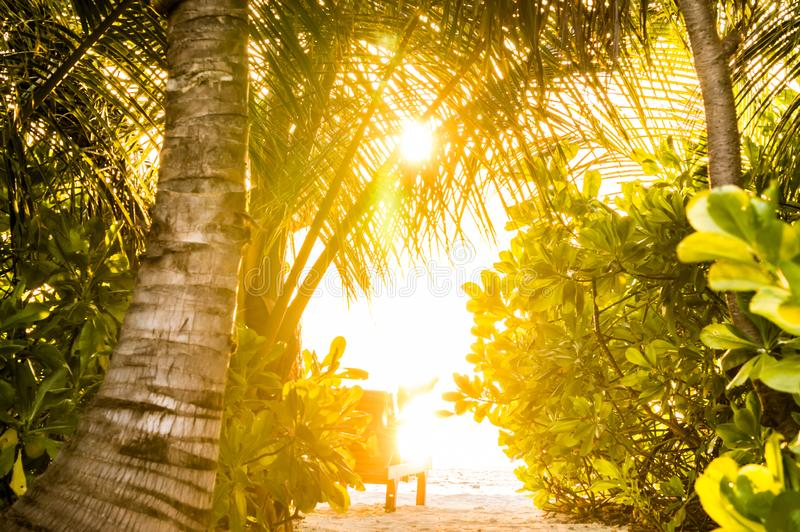 Sunset at ocean seen through foliage of tropical greenery royalty free stock images