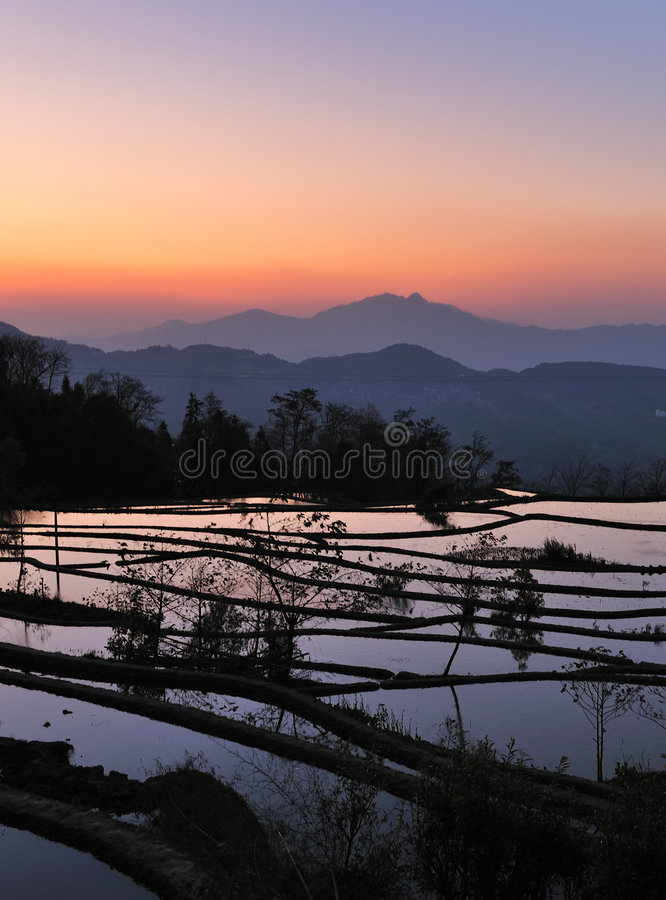 Free Sunset Of YuanYang Rice Terrace Royalty Free Stock Photos - 8828028