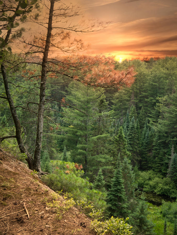 Free Sunset On Two Rivers Trail, Algonquin Park, Canada Stock Photo - 26190930