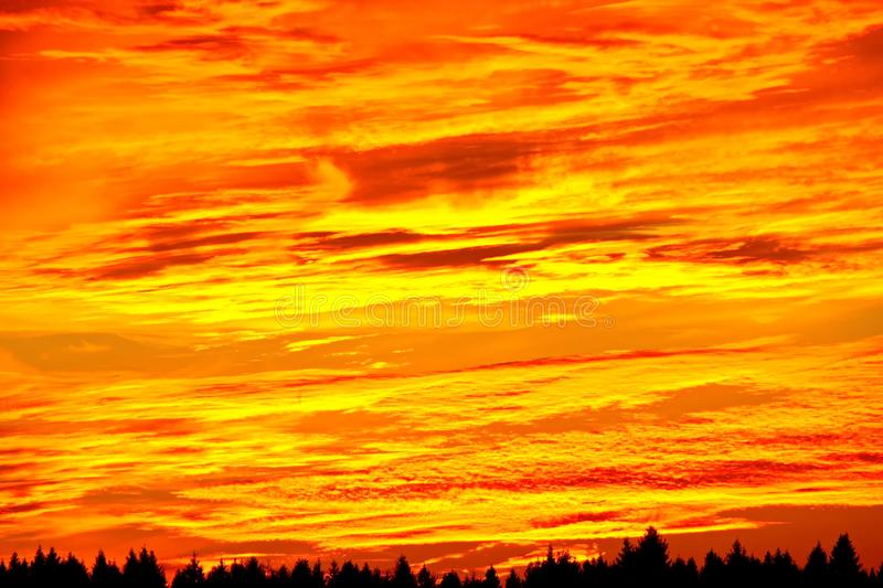 Sunset orange sky background in the evening with clouds on the horizon tree tops spruce forest black stripe. Beautiful orange-red sunset over the forest in the stock photos