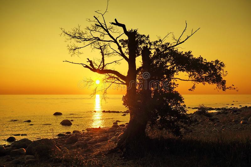 Sunset and orange sky over baltic sea stock images