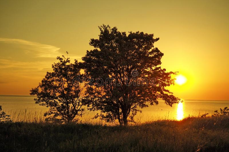 Sunset orange sky over green field royalty free stock photography