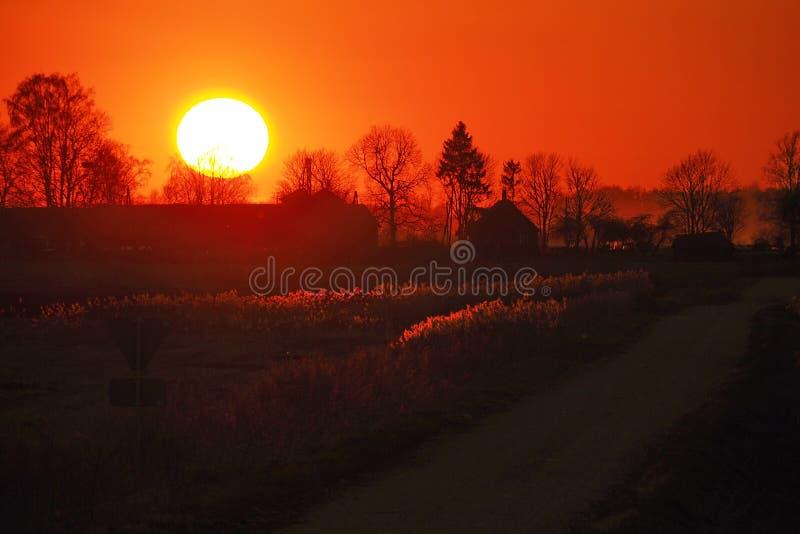 Sun and sunset orange sky over forest stock photos