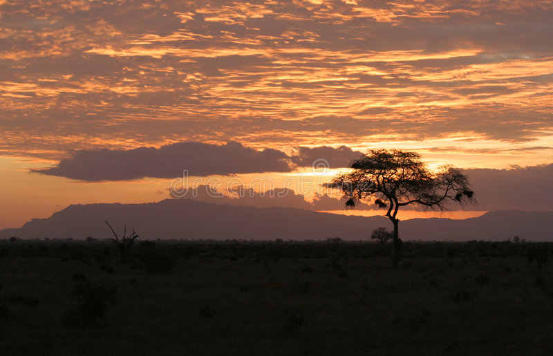 Download Sunset Over African Safari Stock Images - Image: 3561564