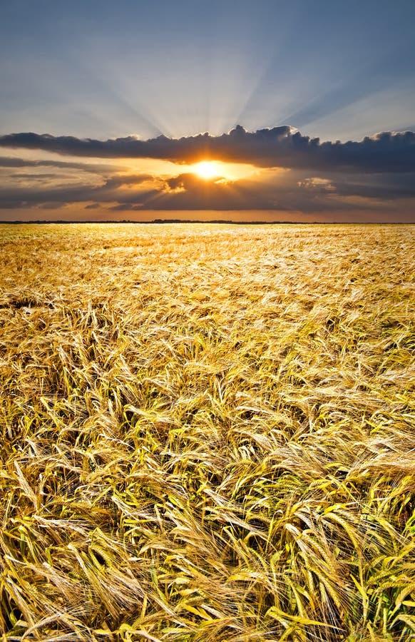 Sunset over barley royalty free stock photo