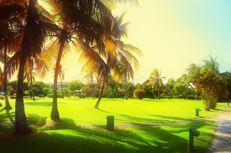 Sunset over beautiful tropical garden in luxury carribean resort royalty free stock photo