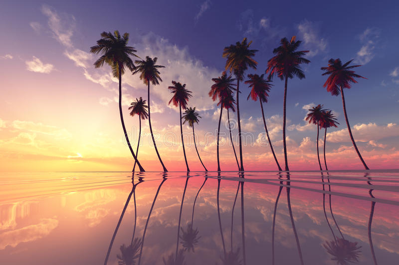 Sunset over calm sea. Coconut palms at dramatic tropical pink sunset over calm sea vector illustration