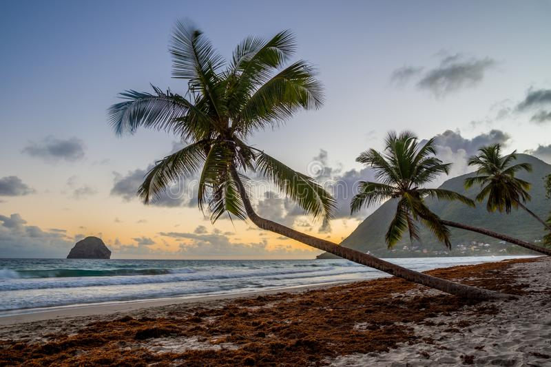 Sunset over Caribbean Martinique beach coconut Le Diamant royalty free stock photography