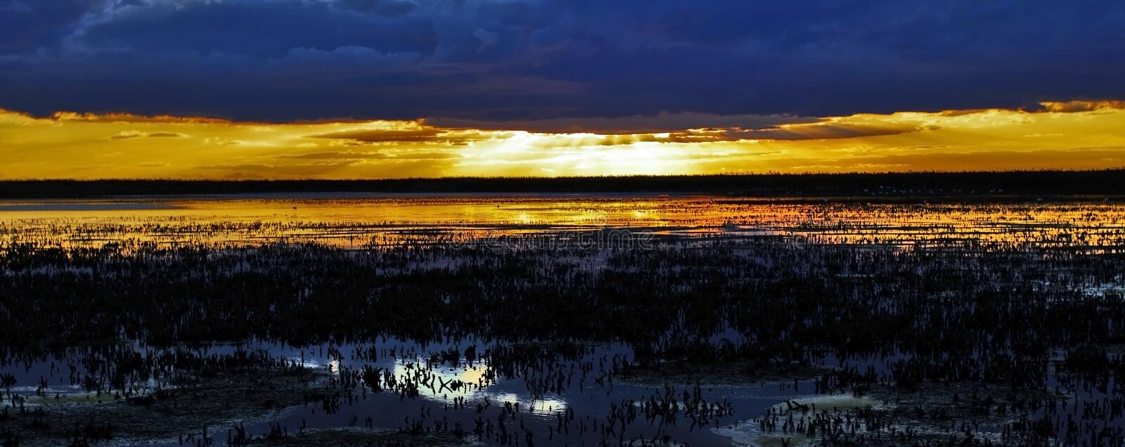 Sunset over cropped reed beds of the Camargue stock photo