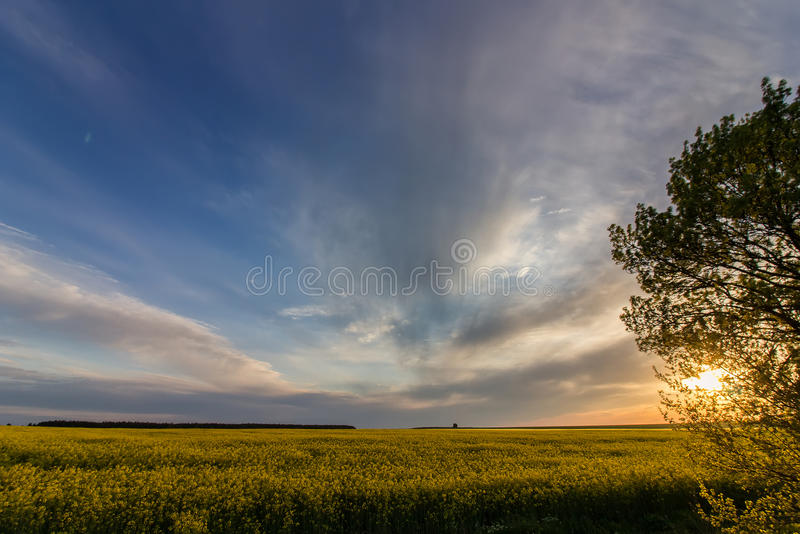 Sunset over the field. Beautiful sunset over field with rapeseed royalty free stock image