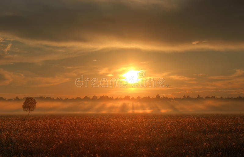 Sunset over a field of dandelions, Russia royalty free stock photos